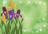 Flowers iris and butterflies silhouettes — Stock Photo