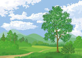 Landscape, summer forest and maple tree — Stockfoto