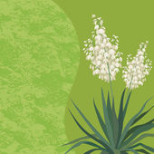 Background with flowers Yucca — Stock Photo