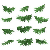 Christmas tree green branches set — Stock Vector
