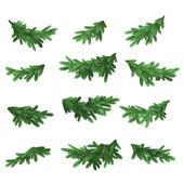 Christmas tree green branches set — Stockvektor