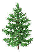 Christmas green spruce fir tree isolated — Stock Photo