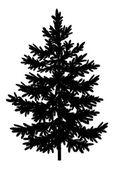 Christmas spruce fir tree silhouette — Stock Photo