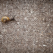 Small snail crawls on a canvas — Stock Photo