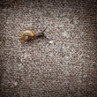 Small snail crawls on a canvas — Stock Photo #12030852