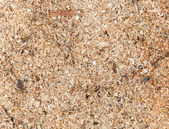Sawdust detailed background texture — Stock Photo