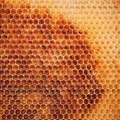 Fresh honeycomb background texture — Stock Photo