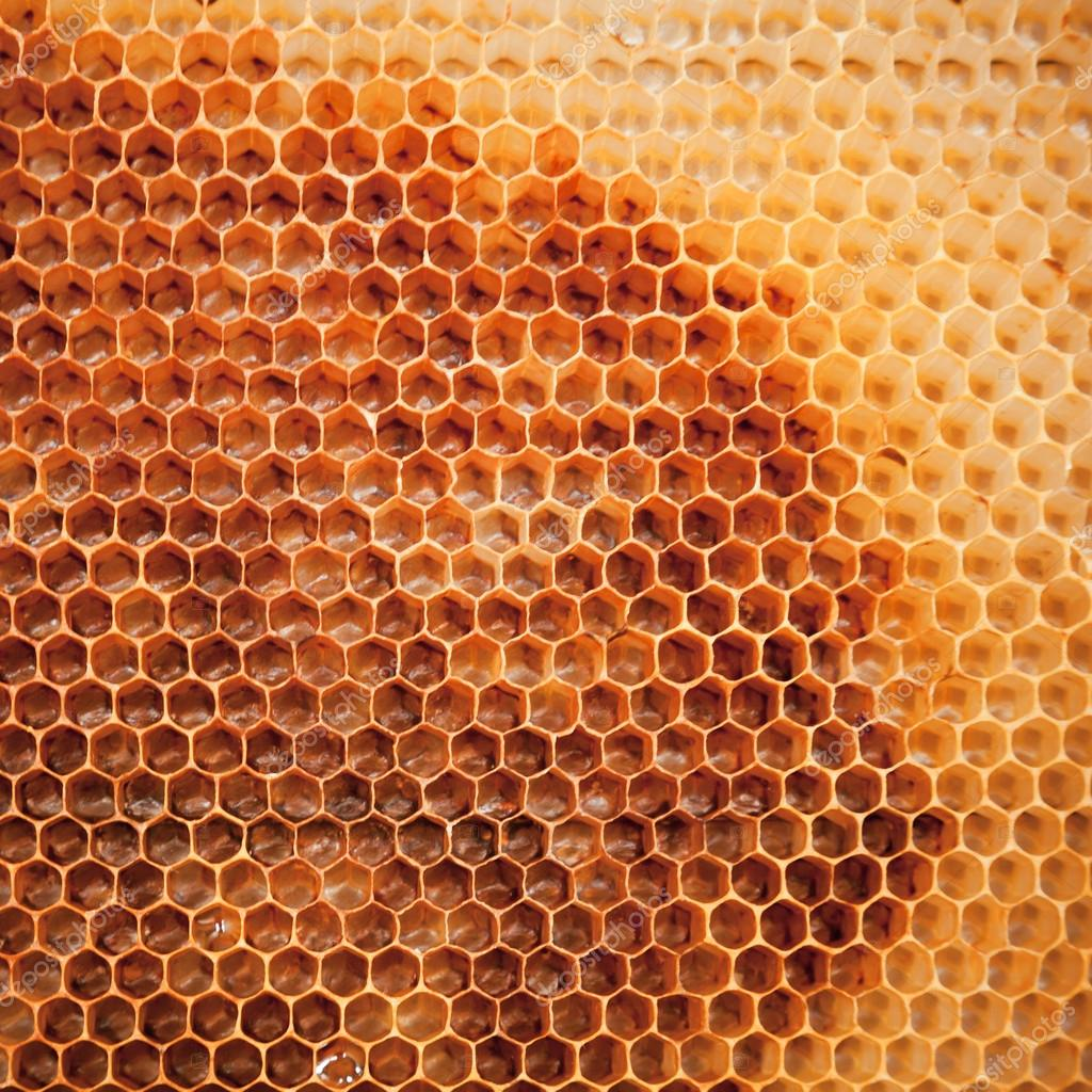 Fresh honeycomb background texture — Stock Photo #12480692