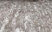 老风化混凝土墙背景纹理 — 图库照片