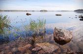 Saz ve taşlar, kıyı yatay — Stok fotoğraf