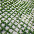 Ecological concept. Grass grows through the road paving — Stock Photo