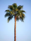 Яркие пальмовое дерево выше голубое небо — Стоковое фото