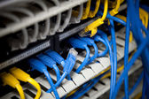 Large network hub and connected blue and yellow cables — Stockfoto