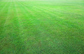 Fresh green grass field background texture — Stock Photo