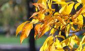 Bright orange autumn leaves background — Stock Photo
