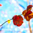 Stock Photo: Beautiful autumn red and yellow leaves