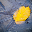 Yellow autumn leaf and small insect frozen in ice — Stock Photo