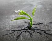 Little sprout fleur se développe par le biais de terrain de l'asphalte urbain — Photo