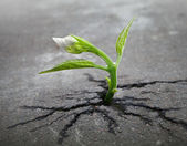 Little flower sprout grows through urban asphalt ground — Stock Photo
