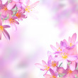 Pink saffron crocus flowers on soft colorful background — Stock Photo