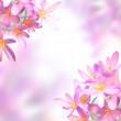 Pink saffron crocus flowers on soft colorful background — Stock Photo