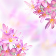 Saffron crocus flowers on colorful blurred background — Stock Photo