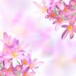 Saffron crocus flowers on colorful blurred background — Stock Photo