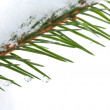 Fir tree branch with snow and frozen water drops on it — Stock Photo #19335853