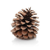 Opened cedar cone isolated on white — Stock Photo