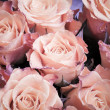Bouquet of wet pink roses flowers macro photo — Stock Photo