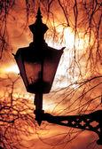 赤い夜の空と木の枝の上の古いランタン — ストック写真