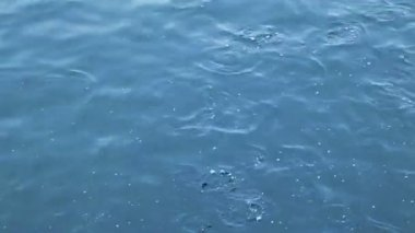 Flock of fish floats in blue sea water — Стоковое видео