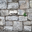 Old gray stone wall with green grass between blocks — Stock Photo