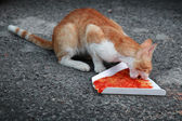 Red homeless cat eats pizza on the asphalt road — Stock Photo