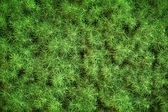 Fresh green needles background texture — Stock Photo