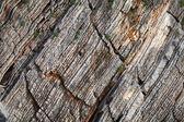 Coastal stones background texture. Adriatic Sea, Montenegro — Stock Photo