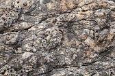 Coastal rock background texture. Adriatic Sea, Montenegro — Stock Photo