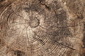Old weathered wood section background texture — Stock Photo