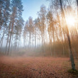 Autumn foggy morning with rising sun in the forest. Karelia, Russia — Stock Photo