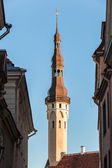 Main city landmark. Town hall tower in Tallinn, Estonia — Stock Photo