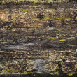 Grunge wet wooden surface background texture with cracked paint and lichen — Stock Photo