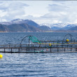 Norwegian fish farm for salmon growing in open water — Stock Photo