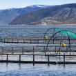 Norwegian fish farm for salmon growing in open sea water — Stock Photo