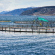 Norwegian fish farm for salmon growing in fjord — Stock Photo