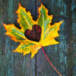 Fall in love photo metaphor. Colorful maple leaf with heart shaped hole lays on dark wooden table — Stock Photo