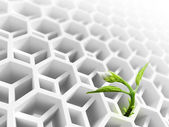 Little green flower sprout grows through abstract white modern honeycomb structure — Stock Photo