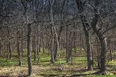 Donkere voorjaar bos met verse gras. natuur fotoachtergrond — Stockfoto