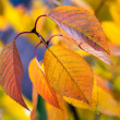 Colorful autumn photo background with macro of yellow leaves — Stock Photo