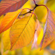 Autumn photo background with macro of colorful leaves — Stockfoto