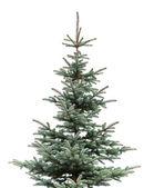 Beyaz arka plan üzerinde izole genç çam ağacının doğal fotoğraf — Stok fotoğraf